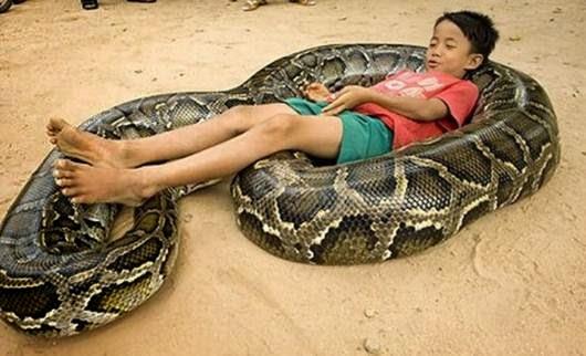 jenis-jenis ular di Indonesia
